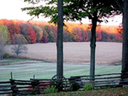 photo of fall colours on the fence line